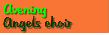 Avening   Angels choir